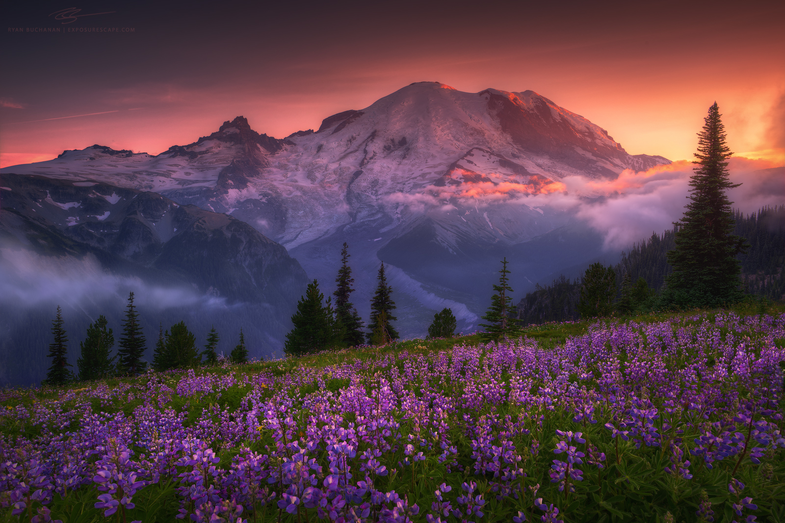 Sunrise, Mount Rainier at sunset during peak flower bloom