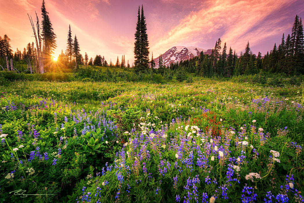 Paradise side of mount rainier during sunset