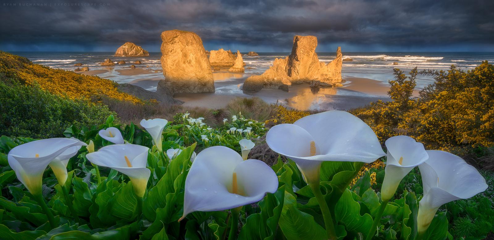 bandon beach seastacks and flowers at sunrise seascape